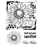 Woodware Clear Singles Stamp - Sunflower Sketch [WW1804]