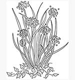 Molly Blooms - Flower Corner