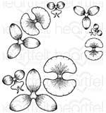 SO: BO16 Heartfelt Creations Cling Rubber Stamp Set 5x6.5 - Botanic Orchid